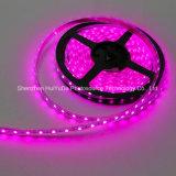 Striscia del chip 30LEDs 7.2W DC24V LED di colore IP20 SMD5050 di colore rosa di alta luminosità