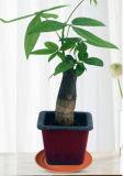Garten-und Haus-Dekoration-Bambusfaser-Blumen-Potenziometer-Tellersegment (BC-FP1050)