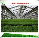 Egetable 성장하고 있는 지적인 유리제 온실
