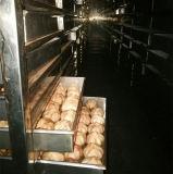 Ail noir sec de fermentation faisant la machine