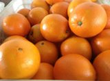 Arancia navel fresca di gusto dolce