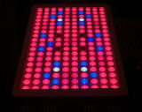 최고 싼 600W 가득 차있는 스펙트럼 LED 베스트는 빛을 증가한다