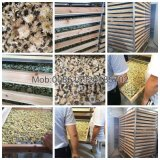 Energiesparendes Kirschtomate-trocknendes Gerät