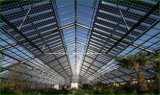 현대 농업을%s 지 통제를 가진 광전지 온실