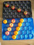 Obst- und Gemüsepp. Tellersegment-Wegwerfplastiktellersegmente für das Fruchtverpacken