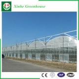 Multi serra della pellicola della portata di agricoltura per le verdure