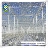 Única extensão da estufa de vidro de alumínio do túnel do frame com ventilação automática