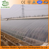 최고 가격 태양 상업적인 폴리탄산염 Hydroponic 관개 온실