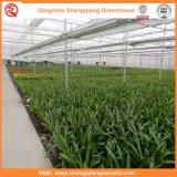 Casas verdes da película do túnel da Único-Extensão para o vegetal/flor