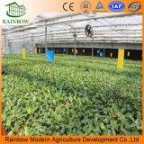 Venlo Type pour la tomate de serre en verre/ /fleur Concombre /l'Horticulture