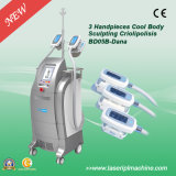 Bd05b 2 Asa de congelación de la grasa adelgaza Cryolipolysis / máquina de la pérdida de peso