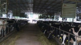 De Ventilator van de Uitlaat van de Apparatuur van de Ventilatie van het Gevogelte van het landbouwbedrijf voor Verkoop in Maleisië