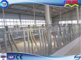 Горячие продажи дешевой крупного рогатого скота (FLM-CP-020)