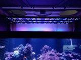 La lampe 2017 d'aquarium de DEL 200W 250W cumule deux emplois pour des aquariums de récif