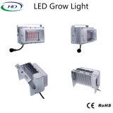 Il LED modulare coltiva lo spettro completo chiaro per canapa