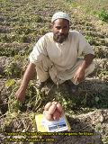 ポテトの植わることのUnigrowの生物有機肥料