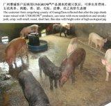 Melhoria do crescimento dos rebanhos animais para a criação de animais do porco