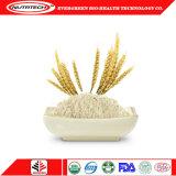 Organisches Hanf-Protein-Erbsen-Großhandelsprotein mit Schokoladen-Aroma