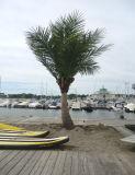 Польза искусственной пальмы кокосов напольная или крытая