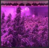 Venta caliente todo el espectro de luz LED de alta potencia crecer para el crecimiento de la Marihuana