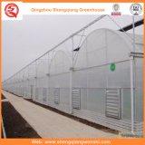 日よけシステムが付いている花またはフルーツまたは野菜栽培のポリエチレンフィルムの温室