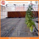 정원 또는 야채 또는 꽃 성장하고 있는을%s 갱도 PC 장 녹색 집 경작하기