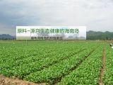Het zuivere Natuurlijke Verse Droge Chinese Bloeiende Poeder van de Kool/Plantaardig Poeder