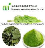 100% lame de poudre de Moringa de nature, extrait de lames de Moringa, fuite de moringa oleifera