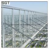 vetro di orticoltura diffuso ferro basso di 4mm per la serra