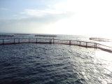 Camps de mer (P4090025)