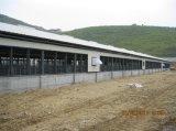 Cage automatique de poulet de coût bas de matériel chinois de volaille et système potable (XGZ-GR024)