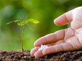 Удобрение азота мочевины было использовано и для удобрения низкопробной и верхней шлихты в земледелии