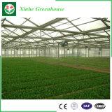 Invernadero hidropónico de la irrigación del mejor policarbonato comercial solar del precio