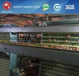 Les élevages de volailles de l'équipement des cages de poulet de la couche de type H
