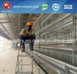 Cage de couche de poulet de volaille en Amérique/en Afrique du Sud