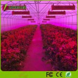 가득 차있는 스펙트럼 300W 600W 900W 1000W 1200W 1500W 2000W 위원회 LED 플랜트는 꽃과 야채를 위해 가볍게 증가한다