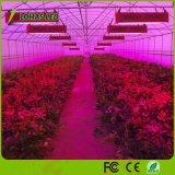 LED 플랜트는 가득 차있는 스펙트럼 LED가 온실 꽃과 야채를 위해 가볍게 증가하는 가벼운 300W 600W 900W 1000W 1200W 1500W 1800W 2000W 위원회를 증가한다
