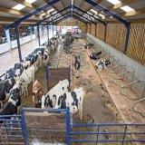 Het professionele Huis van het Landbouwbedrijf van de Koe van het Staal van de Lage Kosten van het Ontwerp Structurele met Concurrerende Prijs