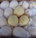 新しい穀物新しいISO Fengshuiのナシ