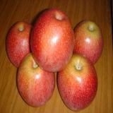 De nieuwe Verse Bulk Verse Appelen van Qinguan Apple