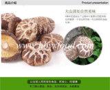 공장에서 하는 건강한 마른 버섯