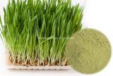 Выдержка Wheatgrass продуктов здоровья органическая, 4:1 ~10: 1