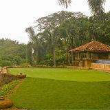 Het Kunstmatige het Zetten Groene Gras van uitstekende kwaliteit (GFN)