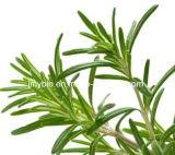 Antioxidansrosemary-Auszug, Rosmarinic Säure 98%, Carnosic Säure 80%