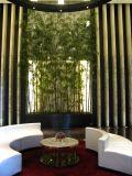 ホテルの木のレストラン椅子および表
