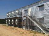 Chambre de poulet en acier préfabriquée de deux étages