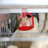 H Type цыпленок слоя каркаса с автоматическим Drinker системы транспортера