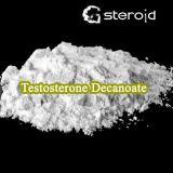 Polvere grezza di Undecanoate del testoterone dello steroide anabolico per Bodybuilding