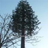 GSM WiFiのシグナルによってごまかされる松の木Monopoleタワー