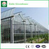 Handelsglasgewächshaus für Seeding